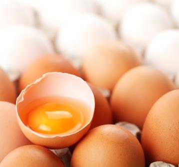 Egg White Protein ELISA Kit